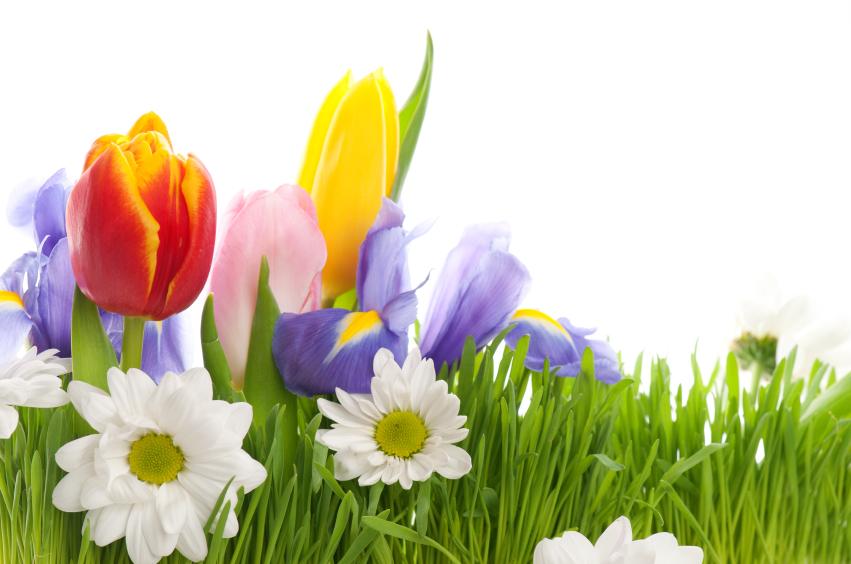 Spring @ The OTCC